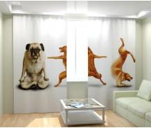 Фотошторы смешные собаки