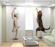 Фотошторы танцуюшцие собаки
