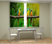 Фотошторы попугаи на ветке
