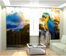 Фотошторы попугай какаду