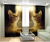 Фотошторы игривый котик
