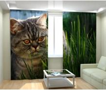 Фотошторы кот Василий