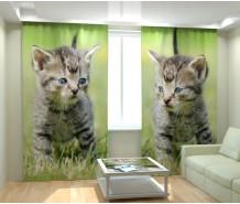 Фотошторы пушистый котенок