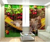 Фотошторы котенок в гаммаке