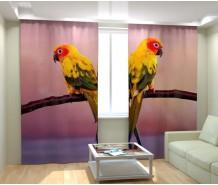 Фотошторы красивые попугаи